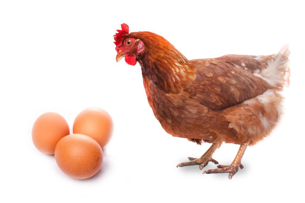 【鶏が先か卵が先か??】